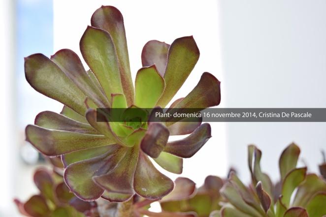 plant-silentkilldesireblog-personalblogger-blogger-stylistblogger-news-nonattaccamento