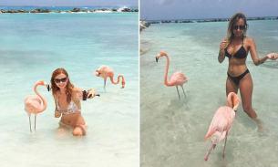 Renaissance Island, Aruba, Caribbean. Flamingo island